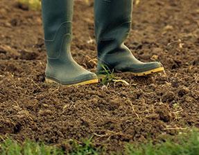 Maaperä ja maan kasvukunto